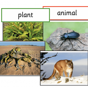 Animals and Plants Sorting