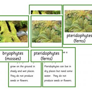 Kingdom of Plants Stage 1