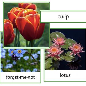 Flowers Sorting